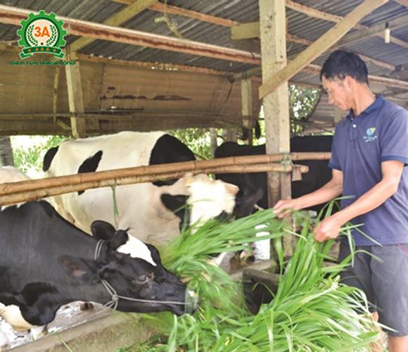 máy băm cỏ, máy băm cỏ đa năng, máy băm cỏ cho bò, máy băm cây cà gai, máy băm ván bóc, máy băm cỏ cho bò, máy băm cây bắp, máy chế biến thức ăn chăn nuôi, máy băm cỏ chăn nuôi,